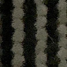 Farbe Zebra